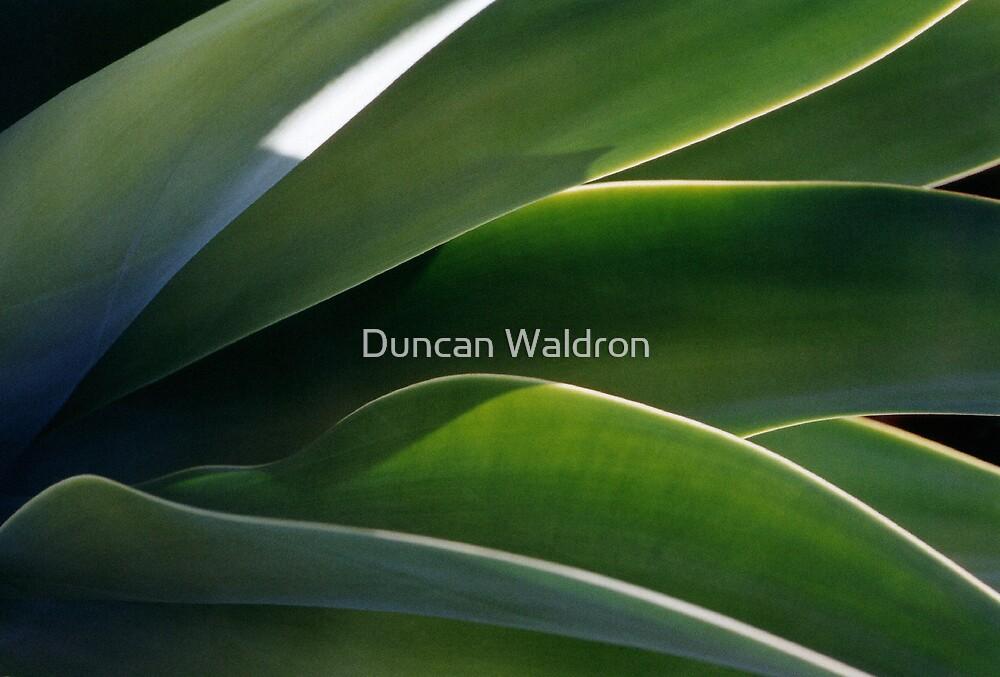 Succulent by Duncan Waldron