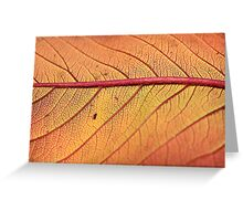 Colors of Fire Greeting Card