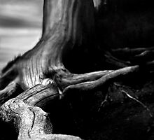 dark stump by isaacjc