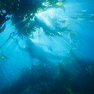 Diver by Eyal Nahmias