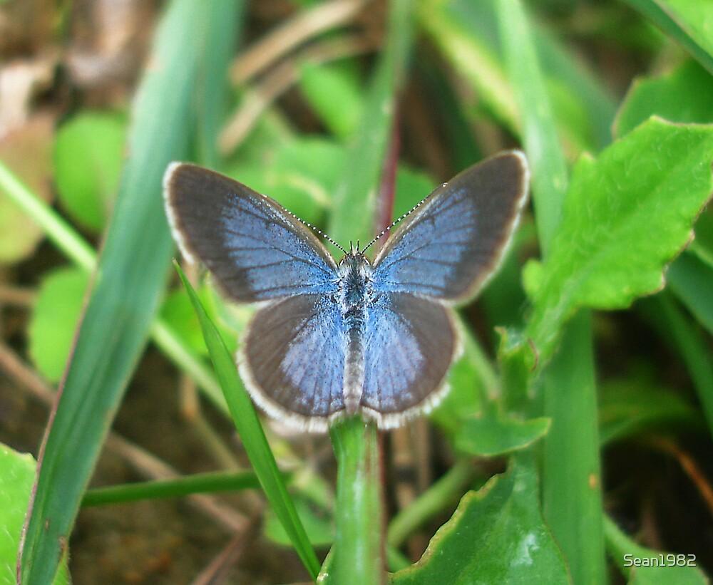 Butterfly Blues by Sean1982