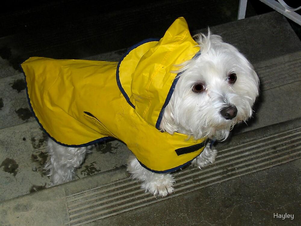 Rain Coat Weather by Hayley