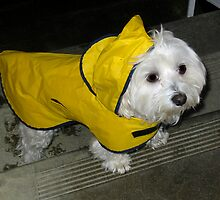 Rain Coat Weather by Hayley