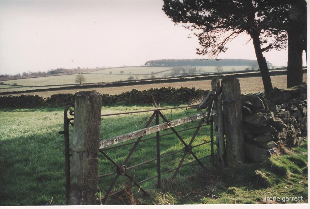 Leicestershire by irene garratt
