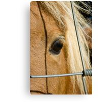 Lonely Poney Canvas Print