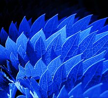 Blue by Lorraine Creagh