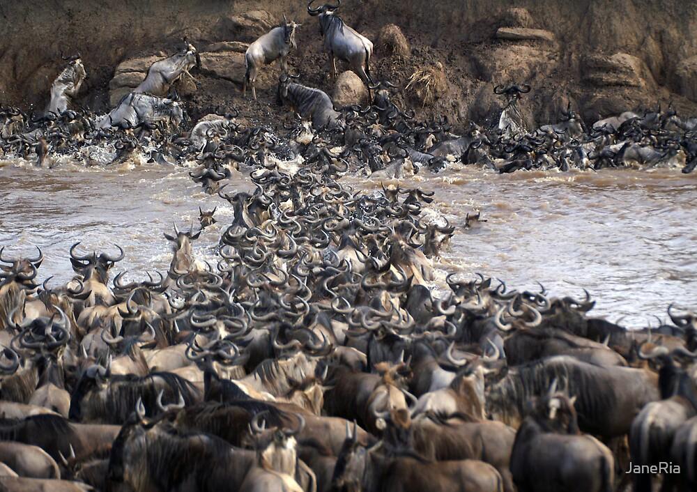 Wildebeest Crossing by JaneRia