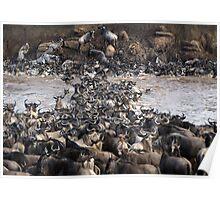 Wildebeest Crossing Poster