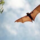 Fruit Bat by 945ontwerp
