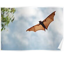 Fruit Bat Poster