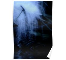 Moonlit Floating Feather Poster