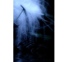 Moonlit Floating Feather Photographic Print