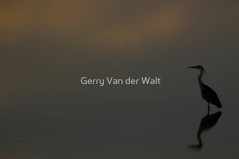 Grey Heron Reflection by Gerry Van der Walt