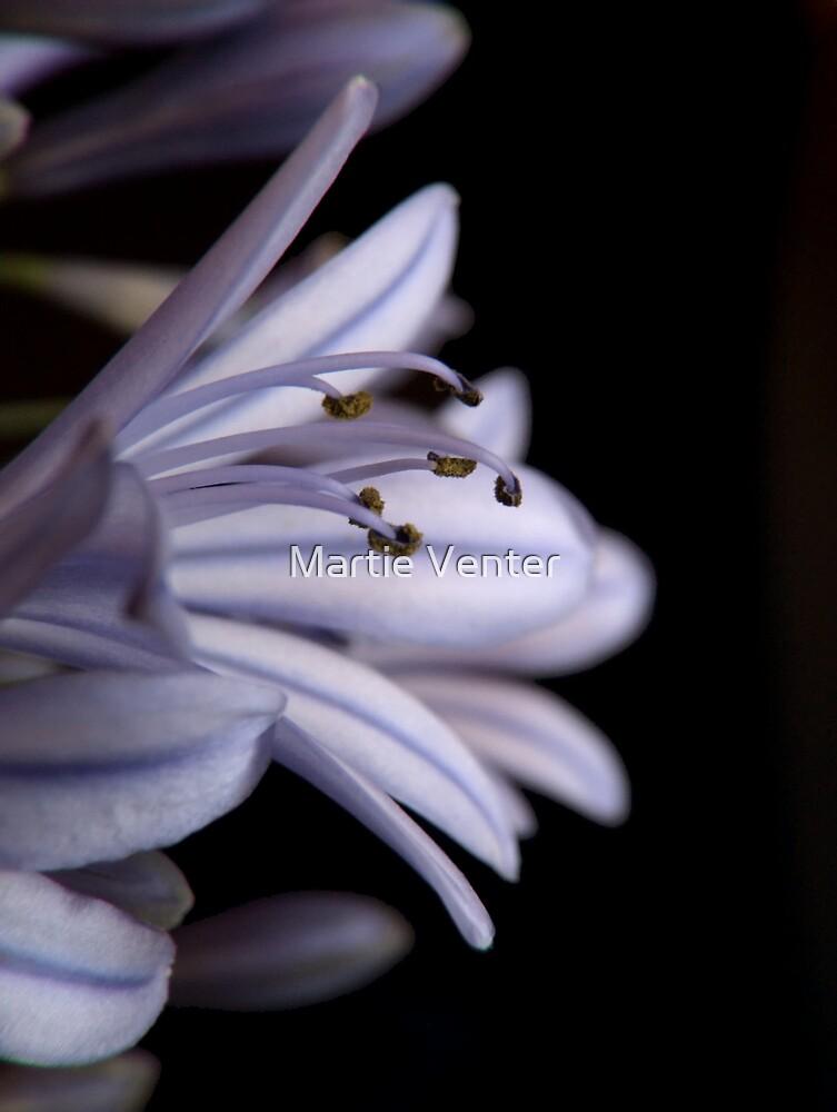 Blue Agapanthus Macro by Martie Venter