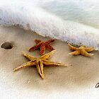 3 Starfish Treasures by Carolyn Staut