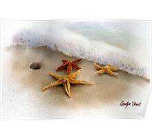 3 Starfish Treasures Poster