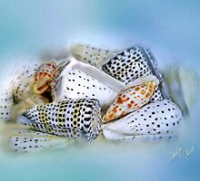 Spotted Shell Group on Blue by Carolyn Staut