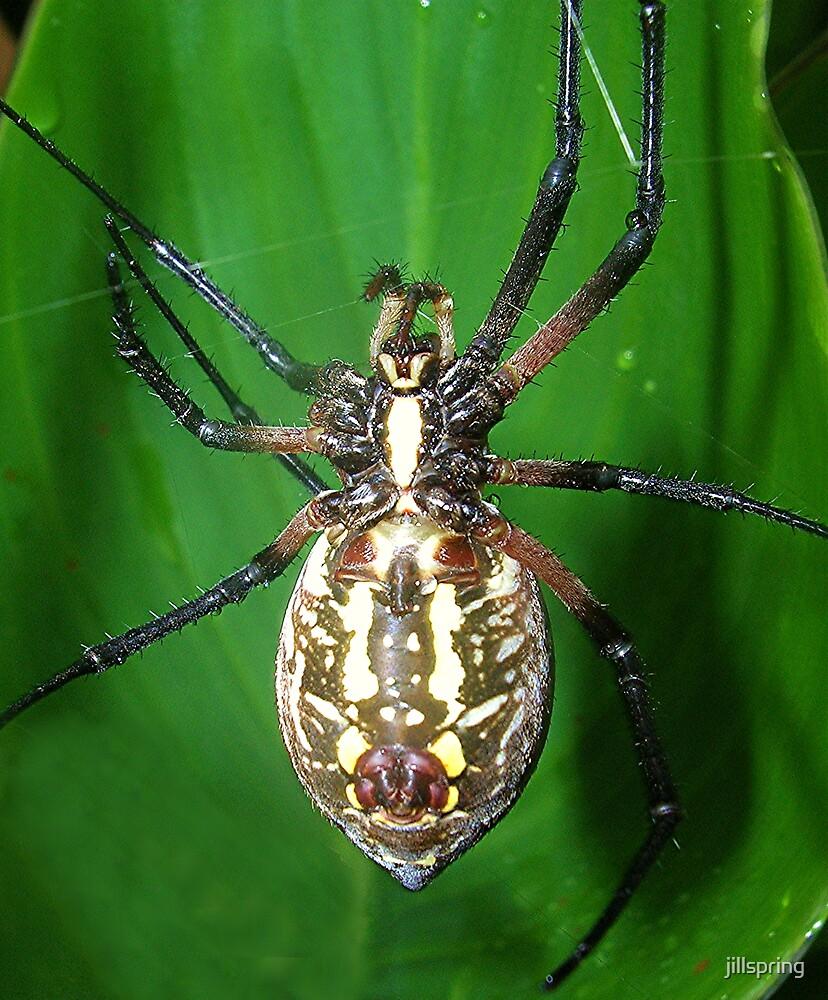 Garden Spider III by jillspring