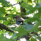 hidden in the tree by sphinx10500