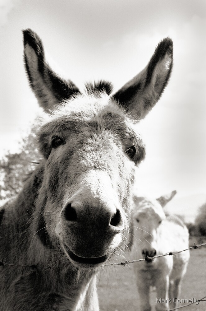 Straad Donkeys by Mark Connelly