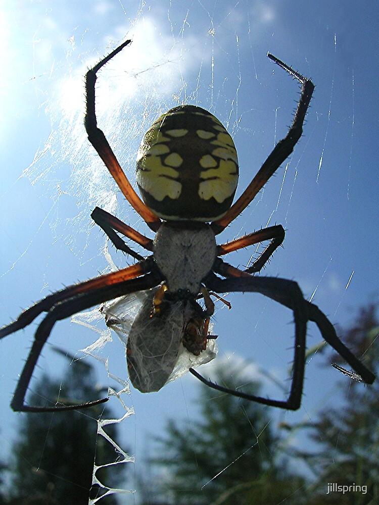 Garden Spider IV by jillspring