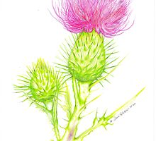 Thistle by sosij