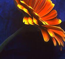 Flower by Jean-François Dupuis