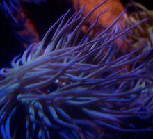 Underwater cretures (digital effect) by Eonalmond