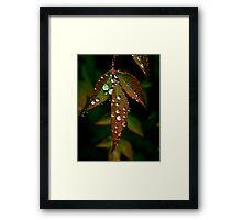 Water Leaf Framed Print