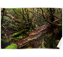 Cradle Mountain National Park Poster