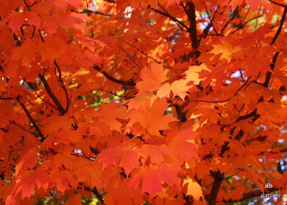 orange fall_2 by daniels