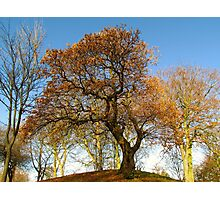 COLOURED TREE Photographic Print