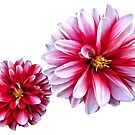 Dahlias Mommy and Child Hand In Hand by Susan Savad