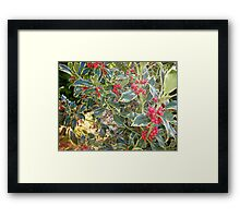 Varigated holly Framed Print