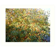 Crab Tree Art Print