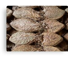 Tobacco Leaves Canvas Print