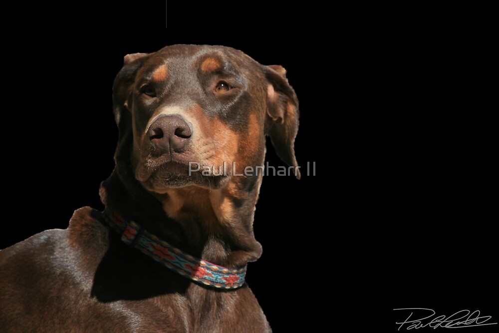 Doberman by Paul Lenharr II