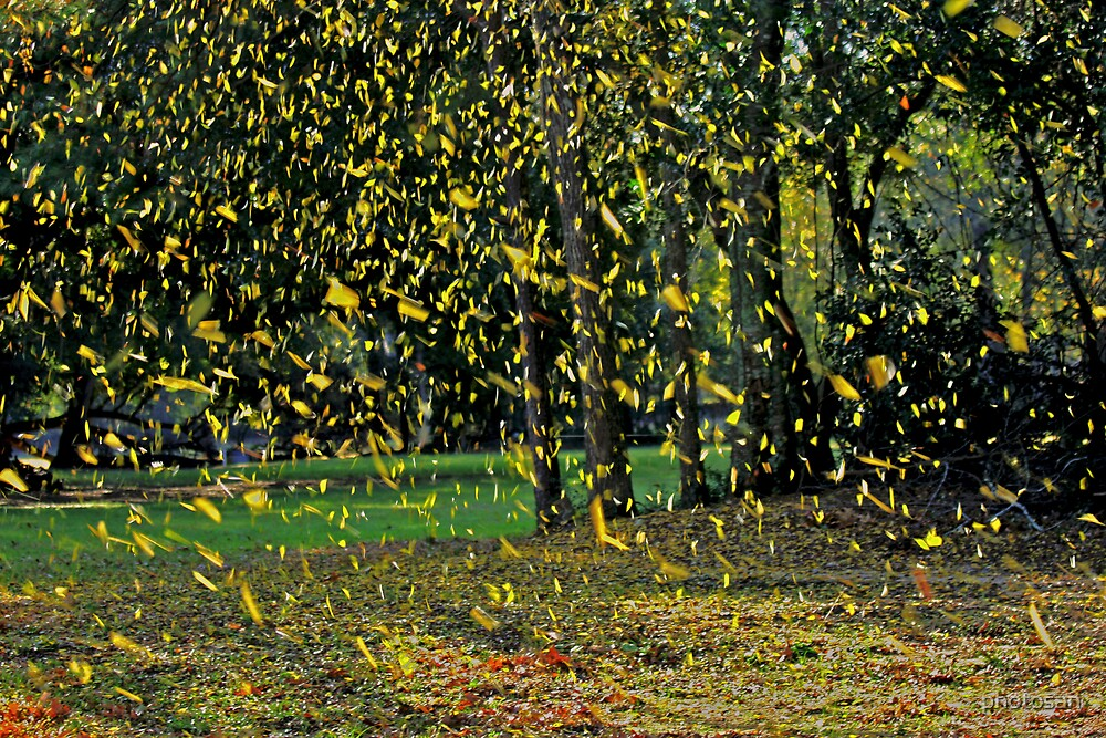 Falling Leaves by photosan