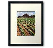 Tobacco Farm, Cuba Framed Print