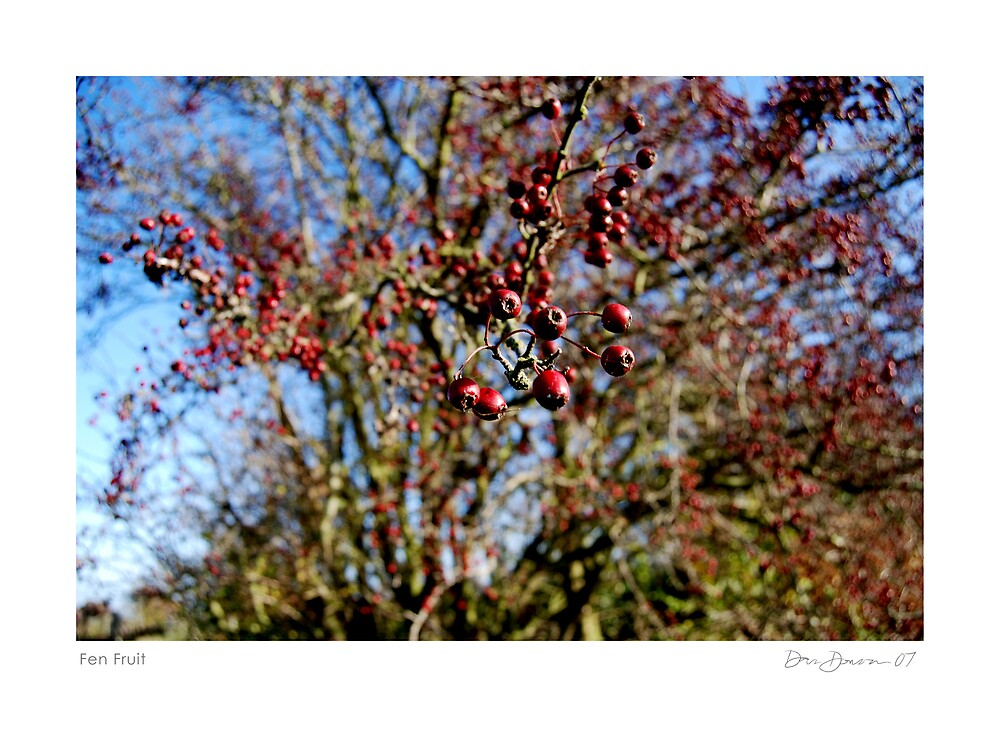 Fen Fruit by Dan Donovan