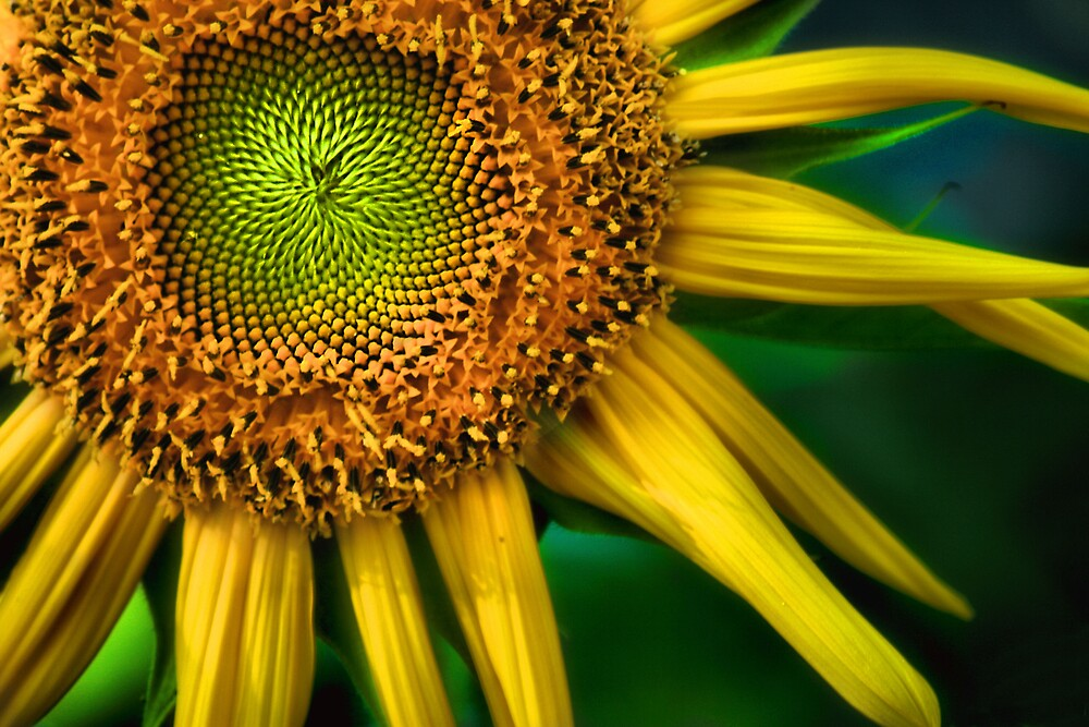 sunshine by rutger