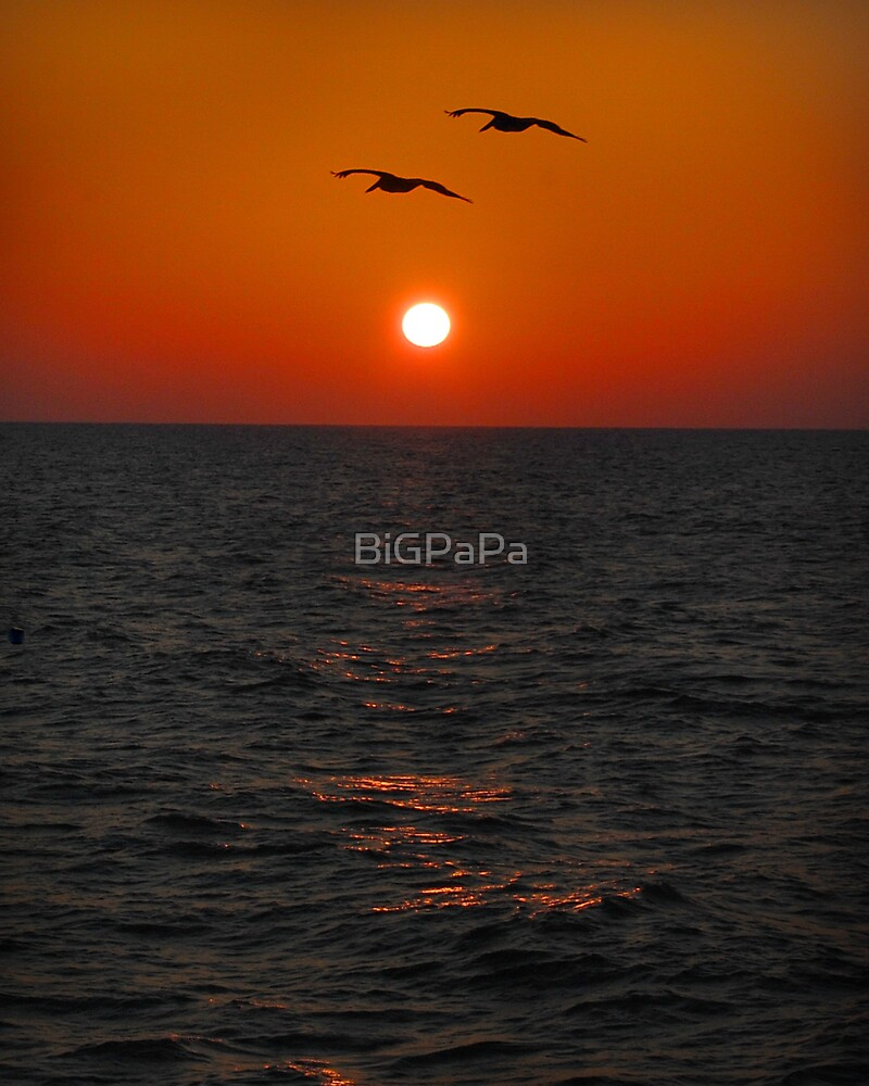 Sunset pelican pair.   by BiGPaPa