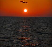 Sunset pelican pair.   by BiGPaPa