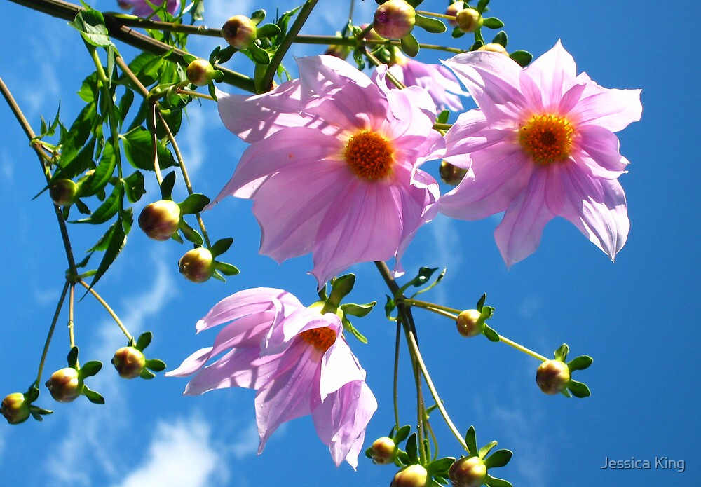 Sunny Tree Dahalias by Jessica King