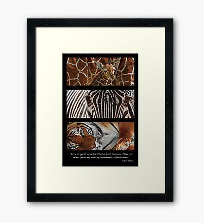 Darwin I Framed Print