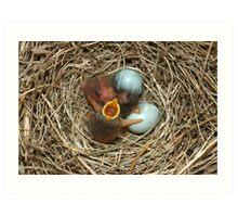 Baby Blue Birds 2 Art Print