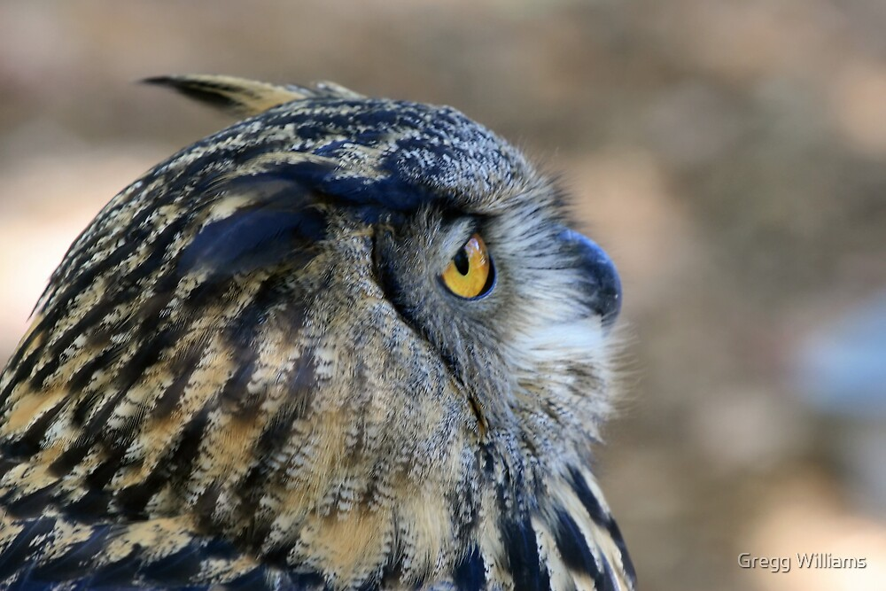 Owl Profile by Gregg Williams