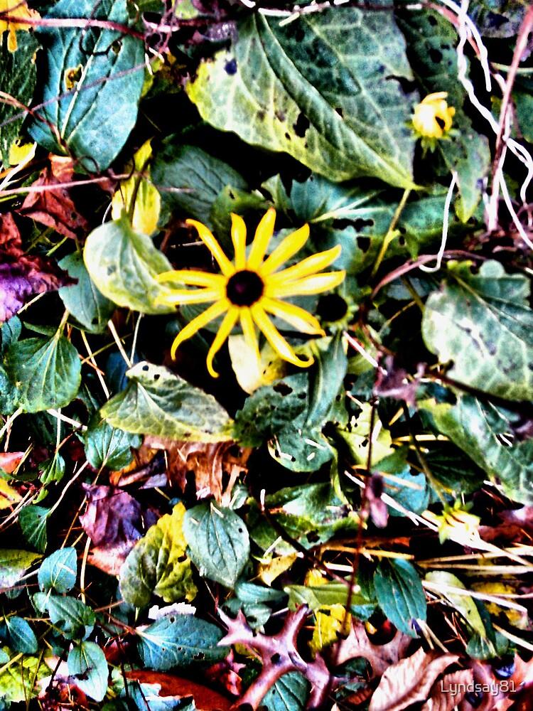 Vibrant Yellow Flower  by Lyndsay81