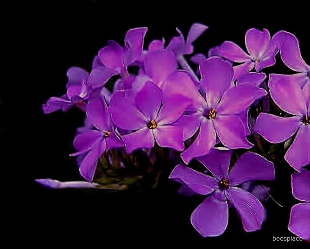 Purple Dreams by beesplace