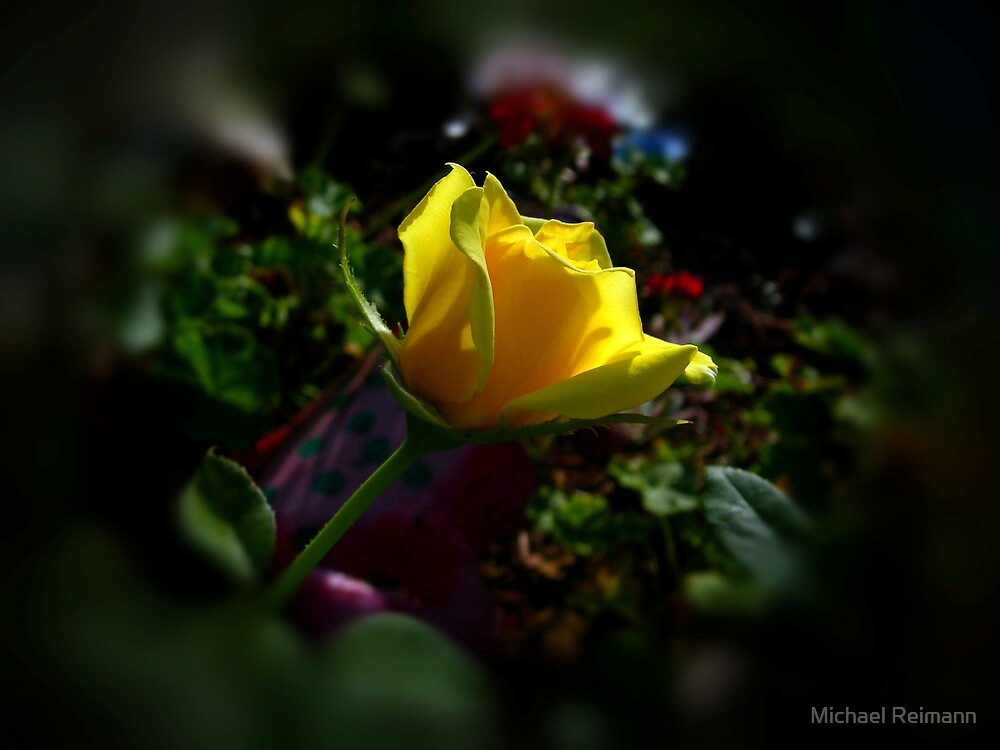 A Rose Is A Rose by Michael Reimann